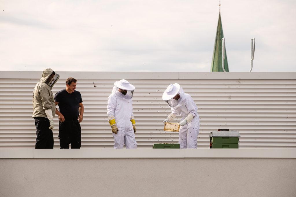 Harvesting of Britannia Rooftop Honey in Trondheim