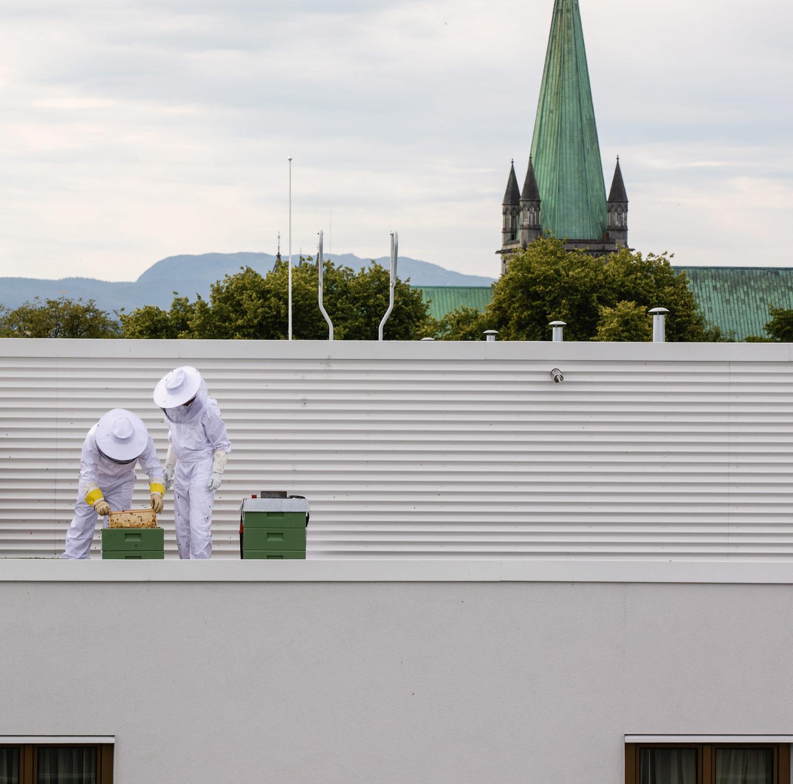 Harvesting Britannia's Rooftop Honey