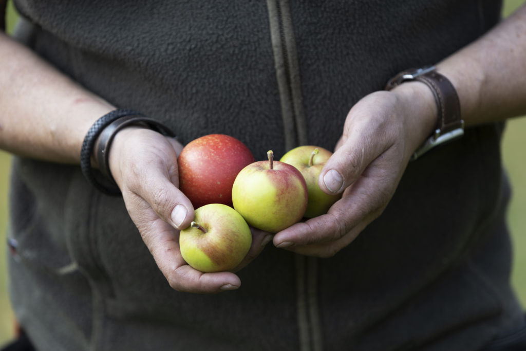 Braattan Gaard orchard and Speilsalen kitchen garden